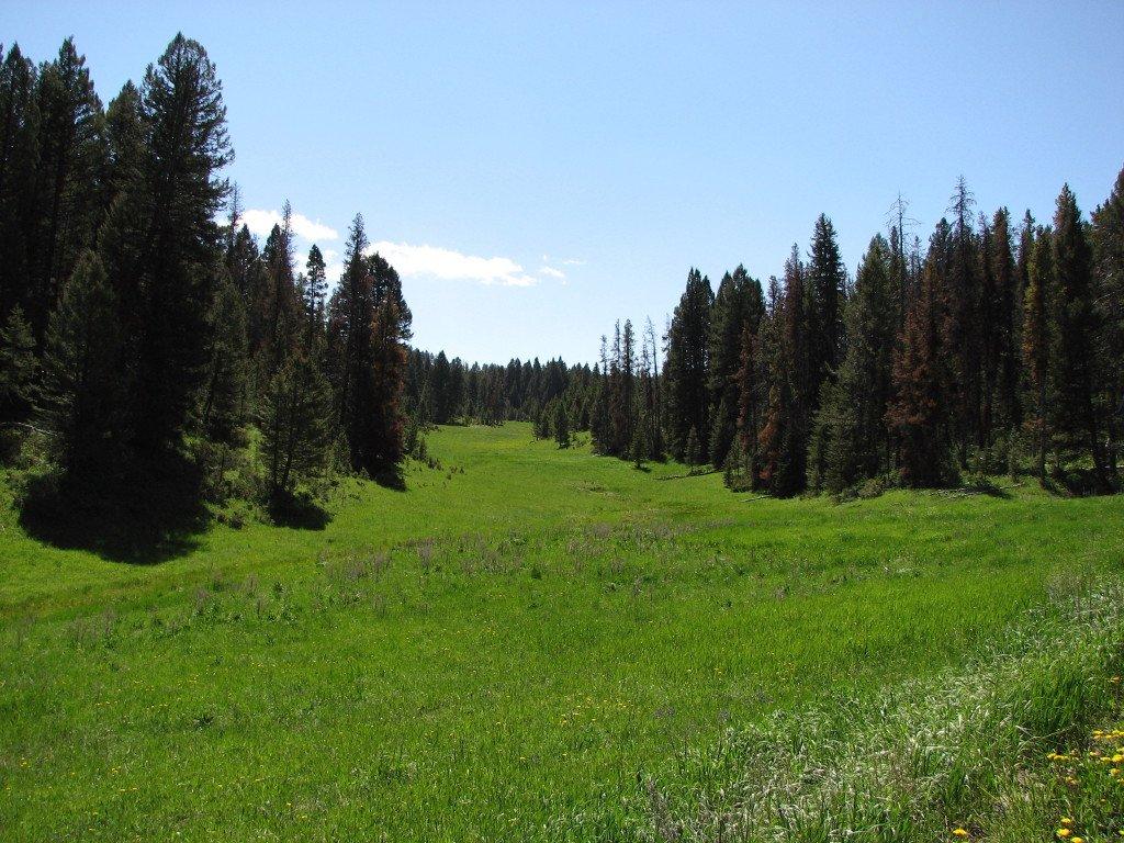 Photo of a meadow near Kings Hill in the Little Belt Mountains