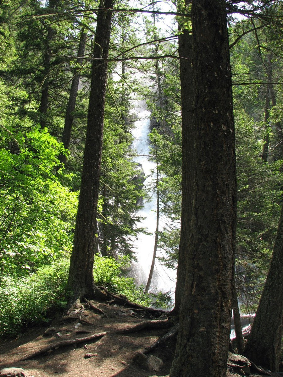 Pine Creek Falls as seen through thick trees