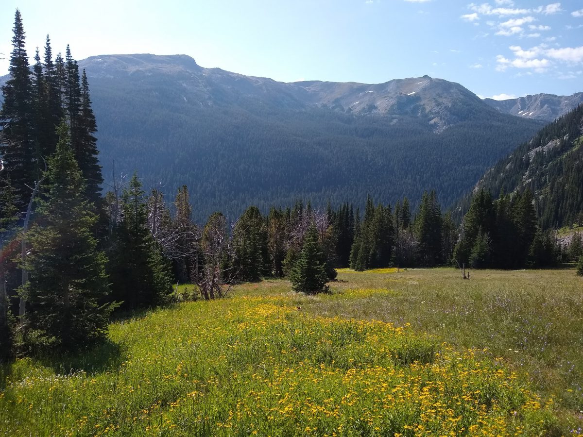Alpine meadow near Davis Creek Divide