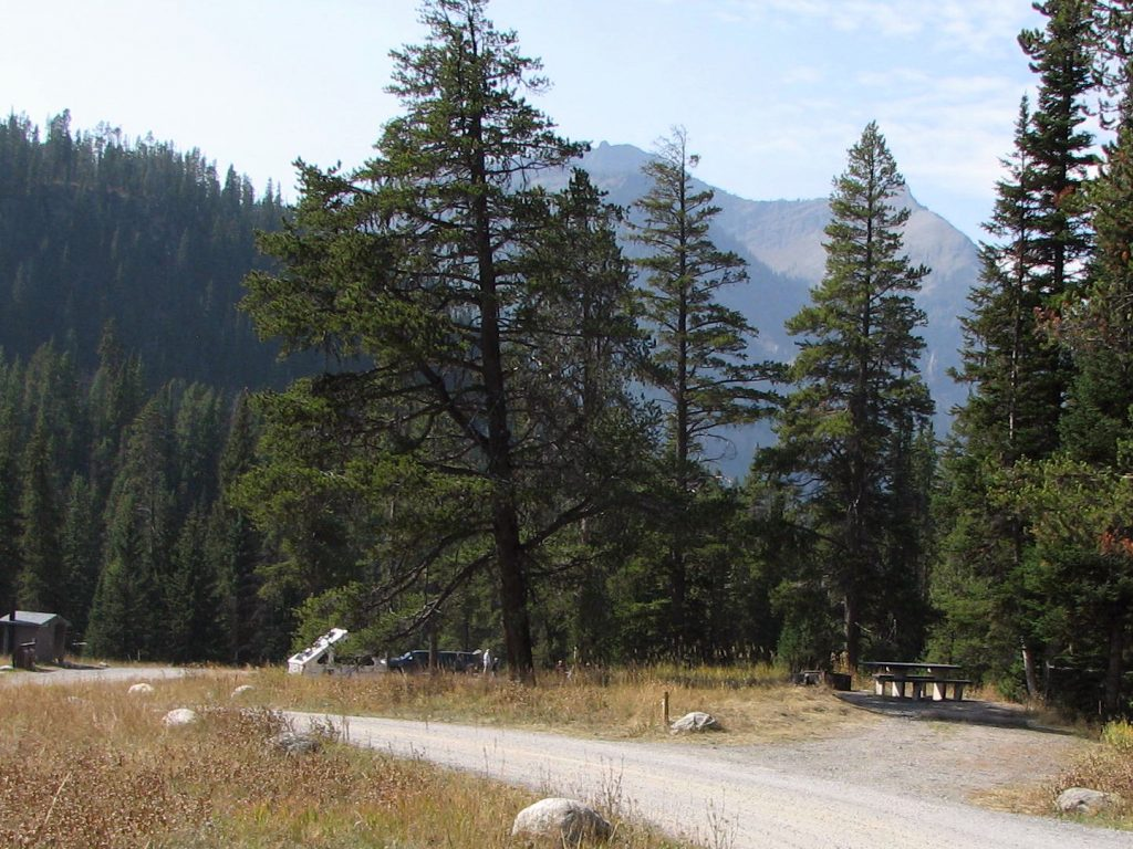Typical campsite in Soda Butte Campground