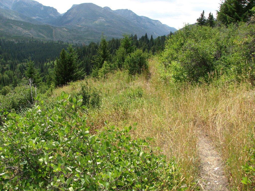 Typical trail on lower Davis Creek