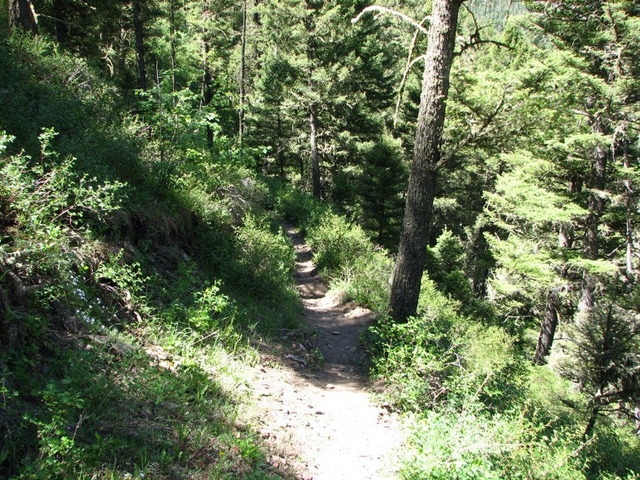 photo of the East Fork Mill Creek trail