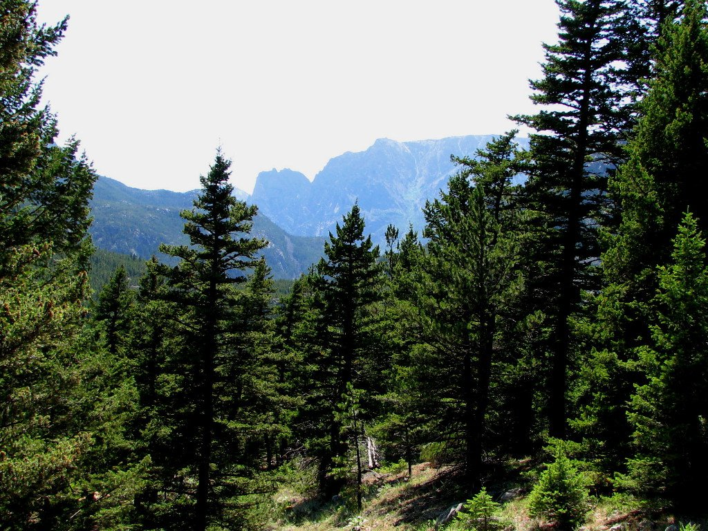 Scenic view from the Woodbine Falls trail